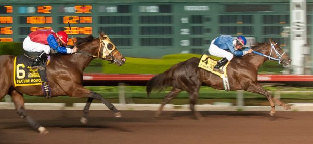 T Gold J, who qualified at Prairie Meadows, won the 2011 Adequan Derby Championship at Los Alamitos